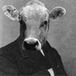 Horace E. Cow's picture