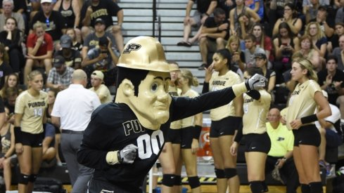 This Isn't That Type Of Protest, Purdue Pete